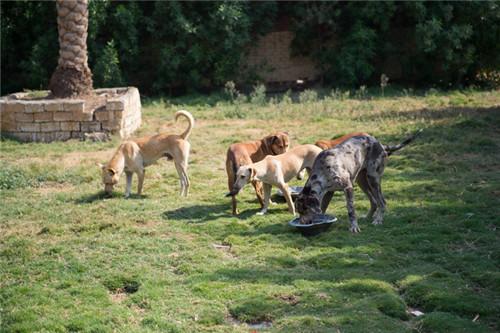 老太做动物保护20年 收养5000多条狗和300多只猫