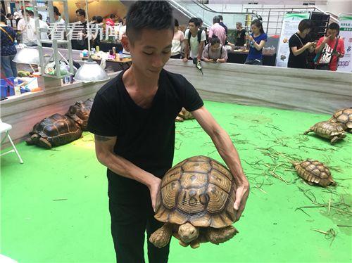 上海休闲水族展萌宠迭出 300万一只的金龟亮相