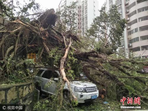 """今年已有7个台风登陆中国 专家解析""""多风""""之年"""