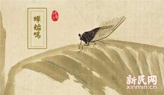 晨读   听,蝉儿鸣树梢