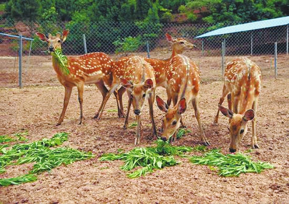 动物园位于南充蓬安蓬安镇利溪镇花房子村,是景区,也是一个动物养殖基