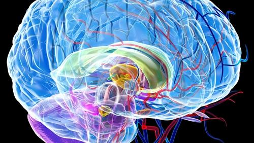 脑科研里程碑!脑建模研究全球开展合作  国际脑实验室诞生