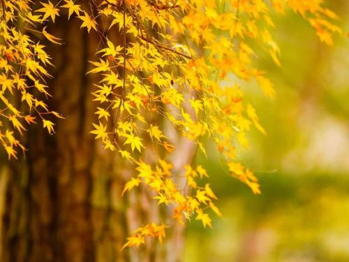 秋分到 养生大事防凉燥