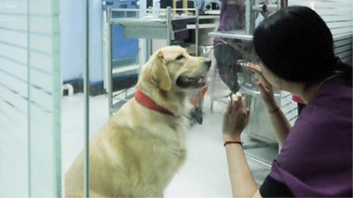 国庆寄养宠物一位难求 宠物协会提醒:注意协议签订避免纠纷