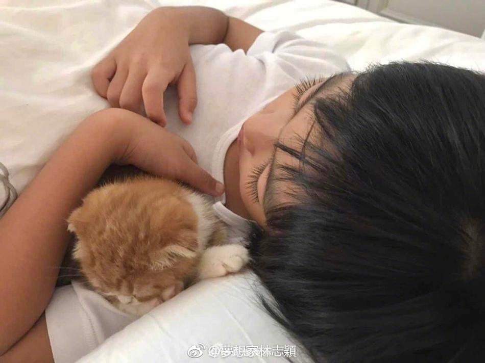 林志颖晒爱子近照 Kimi抱小猫睡觉长睫毛逆天