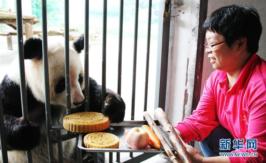 大熊猫吃月饼过中秋(组图)
