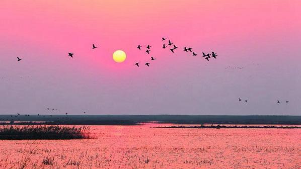 阅读上海100胜 98 | 东滩归羽 芦花轻浅处 飞鸟相与还