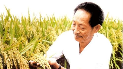 1149.02公斤!袁隆平团队创造世界水稻单产最高纪录