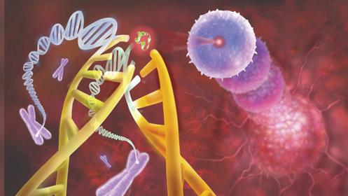 我国科学家发现肿瘤抑制因子新调控机制 为靶向治疗提供新方向