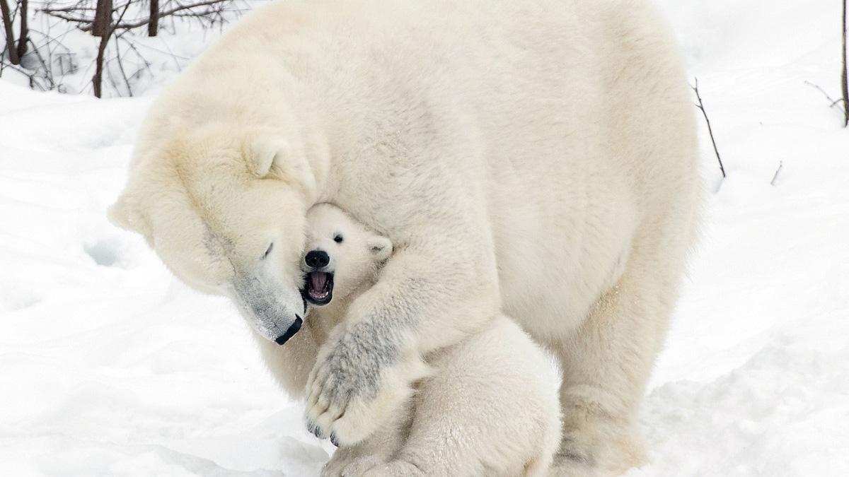 北极科学委员会主席来沪科普演讲:极地旅游越来越热,令人担心