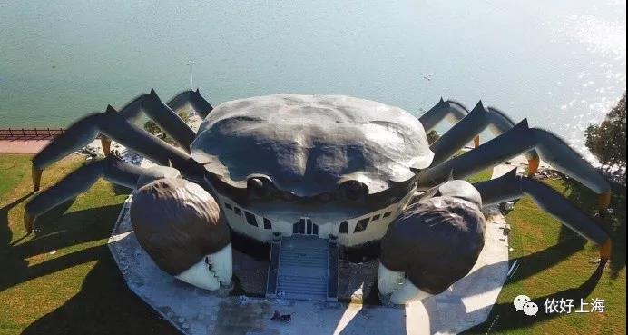 你绝对没见过这么大大大的大闸蟹!网友评论已笑疯!