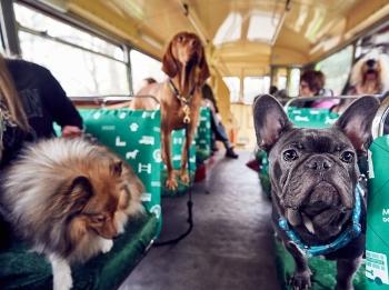 伦敦开通狗狗观光巴士 全球首次专供汪星人